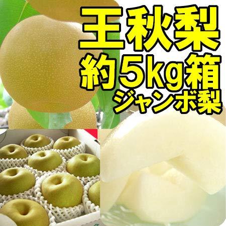 【ジャンボ王秋梨】福島県産 かやば 梨 (約5kg箱約9〜12玉入) 1玉400g以上の大きな梨