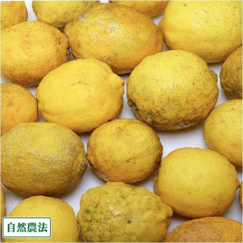 【加工用】 レモン 10kg 自然農法 (広島県 道谷農園) 産地直送 ふるさと21