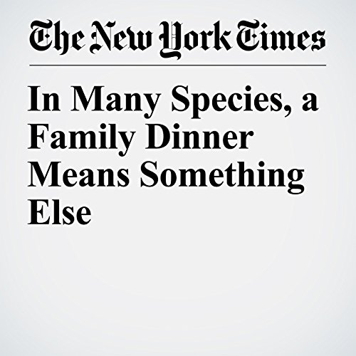 In Many Species, a Family Dinner Means Something Else audiobook cover art