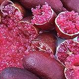Pinkdose® 2018 Vendita Calda Importato Rose Red Finger Lime Pomegrante Semi di Piante, 10 Semi, Professional Pack, un Must per Giardino Rare Plant E4124