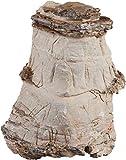 Sera 32352 Rock Asian Pagoda XXL (Pieza Aprox. 6 kg), Piedra Natural para Acuario – Pagoda decoración Aquascaping