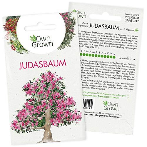 Bonsai Baum Samen Judasbaum: Premium Judas Baum Bonsai Samen für 5 Bonsai Pflanzen zum Bonsai Züchten – Samen Bonsai Judasbaum für den Mini Garten – Judas Tree Liebesbaum Saatgut von OwnGrown