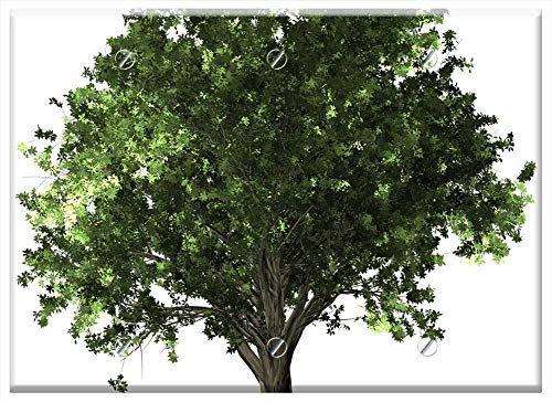 Triple Blank Wall Plate Cover - Zelkova Serrata Tree Bonsai Zelkova Serrata