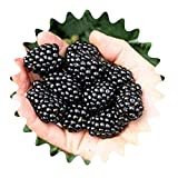 Moras gigantes/aprox. 50 semillas/alto contenido vitamínico/bajo en calorías.