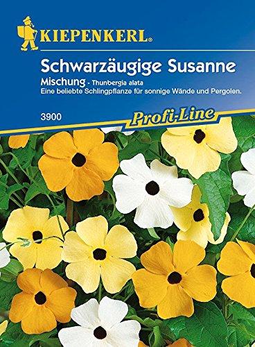 Schwarzäugige Susanne: Schwarzäugige Susanne, Mischung, Thunbergia alata - 1 Portion