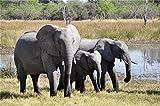 Rompecabezas de 1000 piezas Elefantes grandes cerca del lago Carteles de películas Rompecabezas