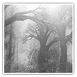 Impresionantes pegatinas cuadradas (juego de 2) 10 cm BW – Mystical Forest Sunlight Beams Tree Fun Decals para portátiles, tabletas, equipaje, reserva de chatarras, frigoríficos, regalo fresco #37893