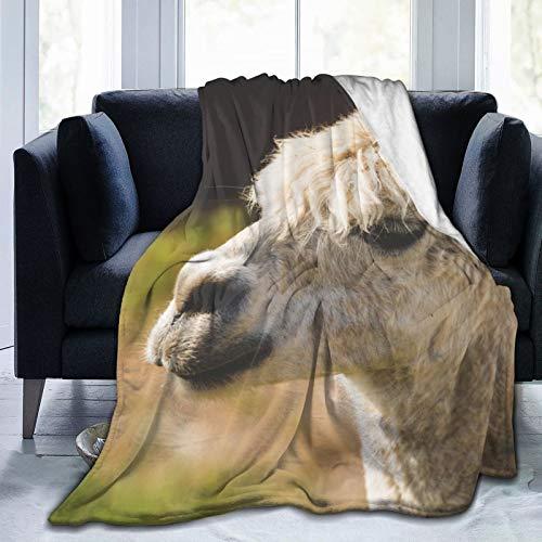 Coloridos productos Manta de forro polar de 50 pulgadas x 60 pulgadas - Llama lana animal blanco franela polar suave cálido manta manta de felpa para cama/sofá/oficina/camping
