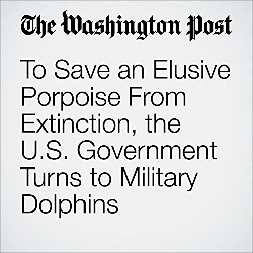 To Save an Elusive Porpoise From Extinction, the U.S. Government Turns to Military Dolphins copertina