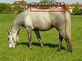 time4horses 1200Denir High Neck Pferdedecke Regendecke Paddockdecke Stalldecke Weidedecke Rug (155 cm)