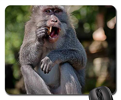 Mausemat Affe Primaten Tierwelt Makak Säugetier Wild Personalisierte Schreibtisch Retro Computer Gedruckt Diy Rutschfeste 25X30Cm Mausmatte Tastatur Mauspads Langlebige Gummi Spie