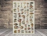 TammieLove Póster de setas con diseño de setas de biología y ciencias de satén, cartel de metal, 20,3 x 30,5 cm