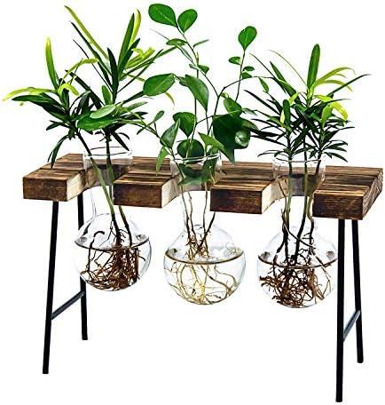 LESES Air Plant Terrarium Desktop Glass Planter Bulb Glass Vase with Wooden Stand Propagation product image