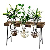LESES Air Plant Terrarium, Desktop Glass Planter Bulb Glass Vase with Wooden Stand Propagation Station for Hydroponics Plants Home Office Garden Decor