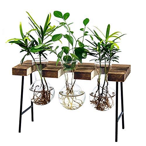 HANGOU Hydroponik Glasvase Luft Pflanzen Terrarium Schreibtisch Glas Pflanzgefäß Glühbirne Glasvase mit Holzständer für Hydrokultur Pflanzen Gartendekoration im Heimbüro (3 Vasen)