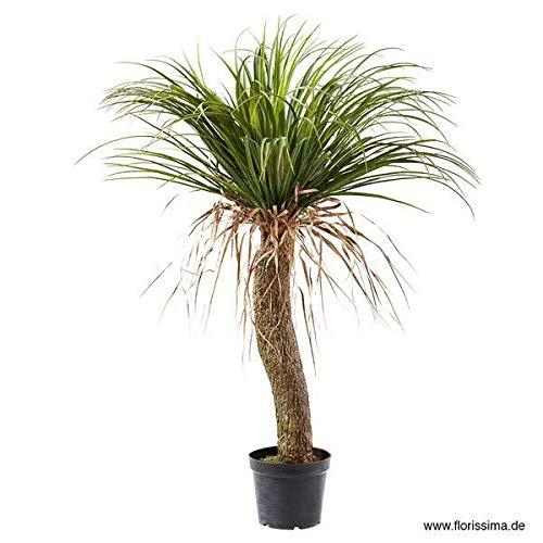 Hochwertige & Künstliche Yucca Palme im Topf - Botanische Kunstpflanze/Zimmerpflanze - Realistische Dekopalme/Kunstpalme - Kunstbaum/Dekobaum/Palmenbaum (Höhe: 100cm)