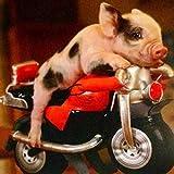 5D diy pintura diamante Bricolaje Diamond Painting Cerdo animal en moto de Diamante Bordado de Punto de Cruz,Manualidades Para Decoración de Pared 30x40 cm(Senza cornice)