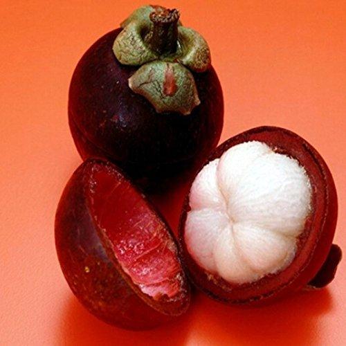 Lot de 10 graines de fruits de mangostan riches en nutriments reine des fruits tropicaux