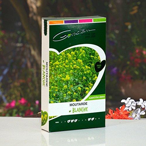 Gondian - Graines de Moutarde Blanche. Culture mellifère et Engrais Vert, 500 g.