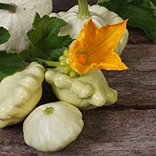 Squash (Summer) Seeds - Scallop, Early White Bush - Packet, Vegetable Seeds