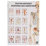 Anatomie des Menschen Mini-Poster Booklet Anatomie 34x24