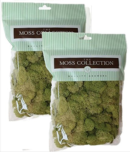 Quality Growers QG2060 Preserved Reindeer Moss, 108.5 Cubic Inch, Spring Green (Pack of 2)