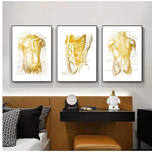 DLFALG Obra de arte de anatomía humana moderna Imagen de pared médica Esqueleto muscular Póster educativo Pintura de lienzo nórdica Decoración de oficina del médico-40x60cmx3 Sin marco