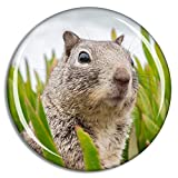 Fridge Magnet Surprised Squirrel Cute Animal Souvenir Animals Magnet Collection Gift Home Decoration Office Whiteboard
