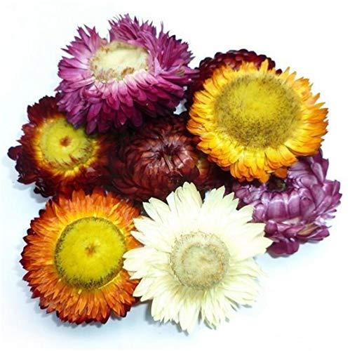 Getrocknete Strohblumenknospen, Helichrysum, Gerbera, Chrysanthemen, gemischte Farben für Dekoration, Blumenhandwerk oder Kräutertee, 150 ml