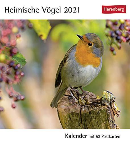 Postkartenkalender Heimische Vögel - Kalender 2021 - Harenberg-Verlag - Postkartenkalender mit 53 heraustrennbaren Postkarten - 15,8 cm x 18 cm