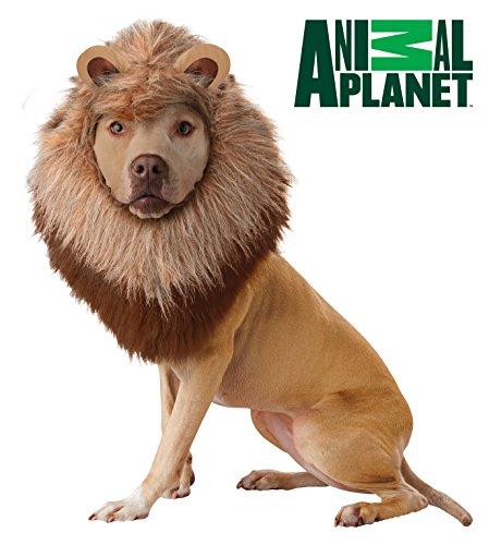 Animal Planet Costume de Lion pour Chien, Taille L