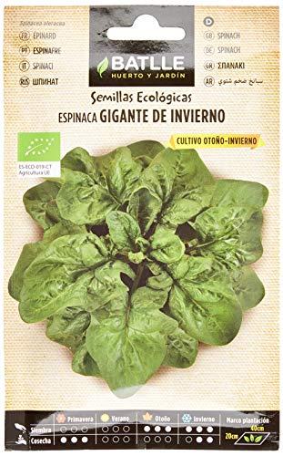 Semillas Ecológicas Hortícolas - Espinaca Gigante de Invierno - ECO
