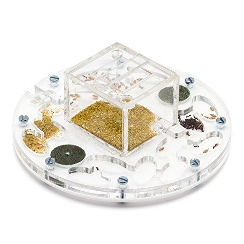 AntHouse - Fourmilière Acrylique Medium - Cercle 15x15x1,3 cm avec Couvercle | Système d'humidité par Mousse | Fourmis Gratuites Inclues
