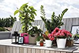 Zoom IMG-1 gf garden for everyday borsa