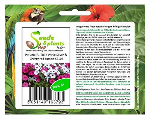Stk - 6x Petunie F1 Tidle Wave Silver & Cherry red - Samen Garten Blume KS108 - Seeds Plants Shop Samenbank Pfullingen Patrik Ipsa