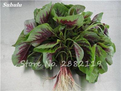 Herb Amaranthus Tricolor Seeds 50 Pcs graminée Semente non Ogm végétale comestible Bonsai Plante en pot sain sucré 1
