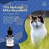 IMG-1 catly spray antipulci gatto cucciolo