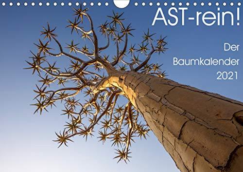 Astrein! - Der Baumkalender 2021 (Wandkalender 2021 DIN A4 quer)