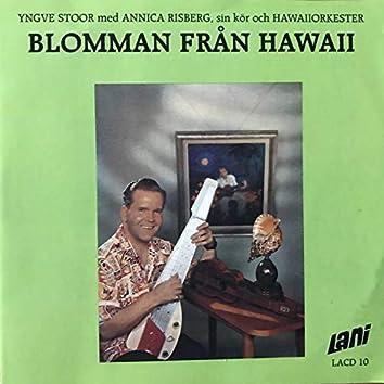Blomman från Hawaii