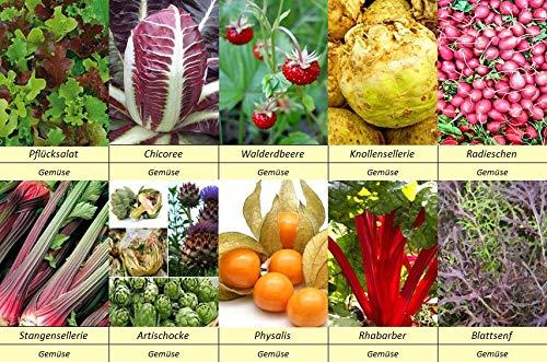 10 Gemüse Samen Set 4 Artischocke, Physalis, Radieschen, Rhabarber, Sellerie, Pflücksalat, Walderdbeere, Chicorée