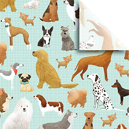 """Jillson & Roberts Printed Tissue 20"""" x 30"""", Best in Show (240 Sheets)"""