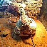 Wosune Decoración de la Estatua del cráneo de la araña de la Serpiente, Estatua del cráneo, para el Tanque de Pescados del Acuario