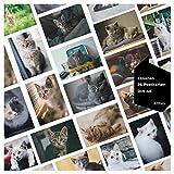 42thinx Lot de cartes postales en carton chromé 300 g A6 I avec chien, cartons de poche, cartons de poche, cartes-cadeaux, flamants, chats ou animaux Lot de 26 cartes postales « Chaton ».