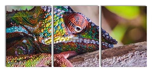 Kameleon van MadagascarXXL canvasbeeld 3 deel | 180x80cm volledige maatregel | Wanddecoraties | Kunstdruk