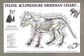Feline Acupressure Meridien Composite Chart Cat (Lake Forest Anatomicals Vet Models)|Lake Forest Anatomicals Vet Models