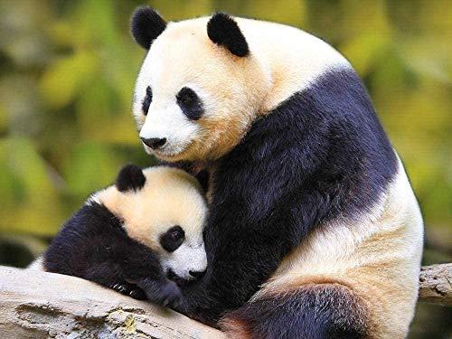 WANGZUO Newjigsaws Puzzles 1000 Panda Bear Animal 50x70cm