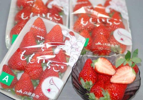 徳島県産 さくらももいちご 4パック産地箱入 贈答向けA品