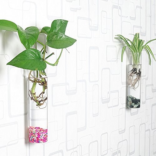 Wall-mounted cylinder terrarium
