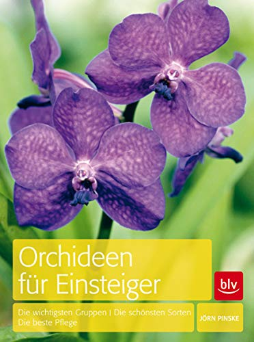 Orchideen für Einsteiger: Die wichtigsten Gruppen · Die schönsten Sorten · Die beste Pflege