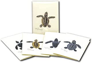 Earth Sky + Water - Sea Turtle Hatchling Assortment Notecard Set - 8 Blank Cards with Envelopes (2 Each of 4 Styles)